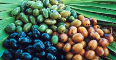 Saw Palmetto Berry